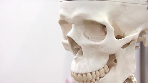 White skull Footage