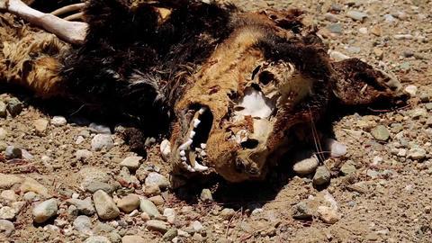Dead dog Footage