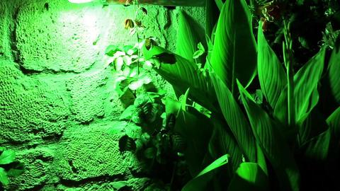 Green plant under green light Footage