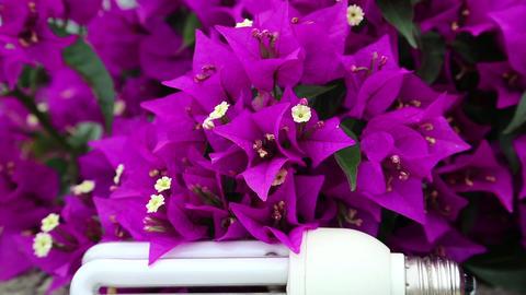 Purple flowers and energy-saving light bulb Footage