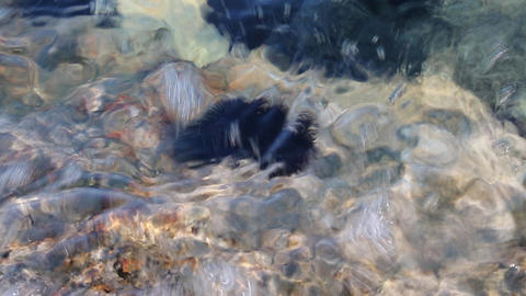 Sea Urchin stock footage