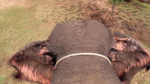 Elephant walking on ground and waving ears Footage