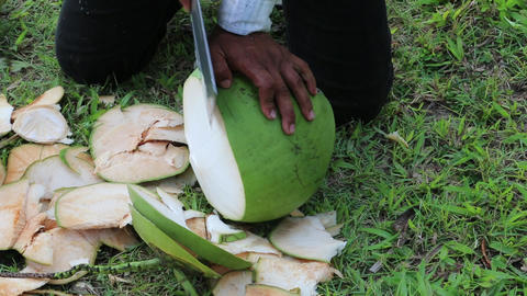 Man peels a big green coconut Footage