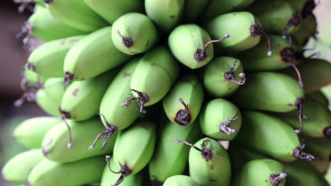 Bunch Of Green Bananas stock footage