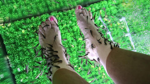 Garra Rufa fishes cleans epidermis from feet Footage