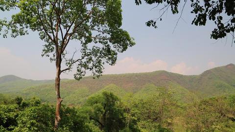 Trees in Erawan National Park in Thailand Footage