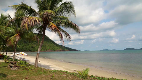Palms on the beach Footage