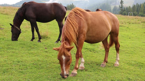 Beautiful horses in meadow Footage