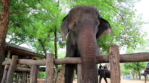 Elephant In Zoological Garden In Pattaya, Thailand stock footage