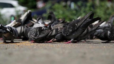 Pigeons peck seeds Footage