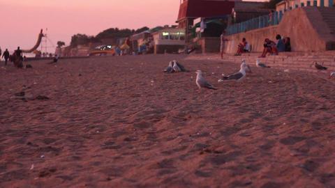 Gulls on the beach Stock Video Footage