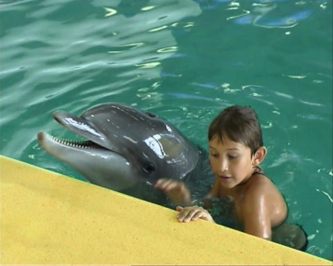 boy with dolphin Stock Video Footage