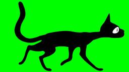 CAT WALK Stock Video Footage
