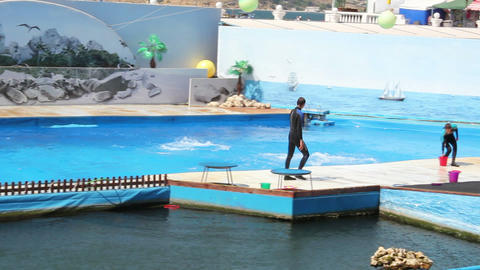 Dolphins in the Dolphinarium 27 Stock Video Footage