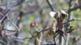 Walnut Tree In Autumn 2 stock footage