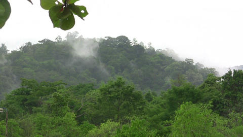 (timelapse ) fog rising from tropical jungle Footage