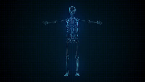 3D Animation of Human Skeleton x ray blue interfac Footage