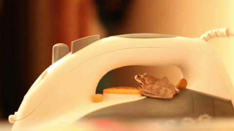 Frog Sitting On The Iron stock footage