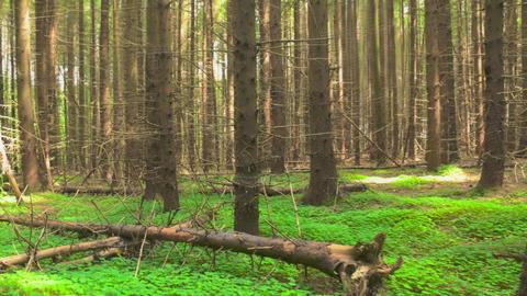Forest slider timelapse 4K Footage