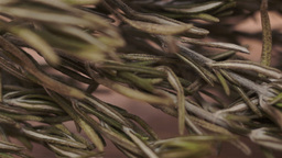 Rosemary Herb Macro Dolly Footage