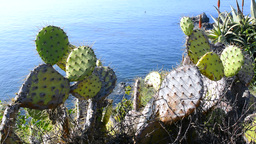 Cactus Over Ovean stock footage