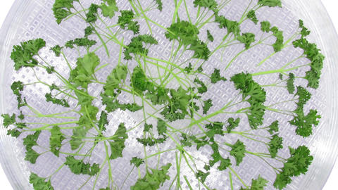 Time-lapse Of Rotating And Drying Parsley, Top Vie stock footage