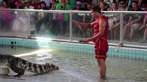 Extreme crocodile show in Pattaya, Thailand Live Action