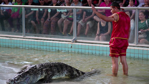 People at extreme crocodile show in Pattaya, Thailand Live Action