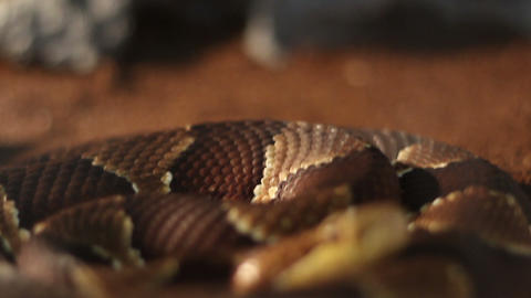 Creepy Dangerous Snake stock footage
