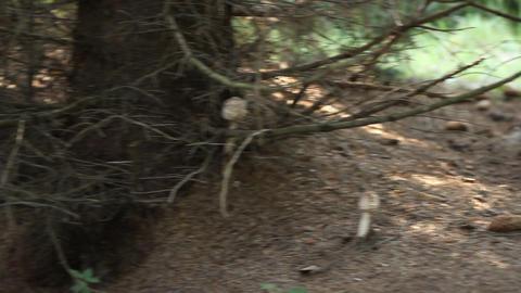 Edible Woods Mushrooms Footage