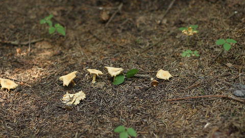Forest Ground Mushrooms stock footage
