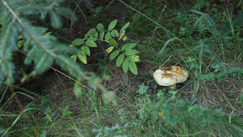 Forest Mushroom Footage