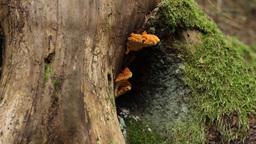 Fungus Grown on Trunk Footage