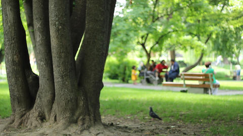 Tree And People In The Park stock footage
