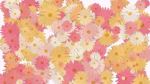 花パーティクル ピンク Animation