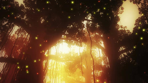 4 K Mysterious Deep Jungle Fireflies in the Sunset Stock Video Footage
