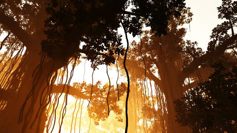 4K Mysterious Deep Jungle in the Sunset 3D 1 Stock Video Footage