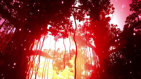 Mysterious Deep Jungle Fireflies in the Sunset Sun Stock Video Footage