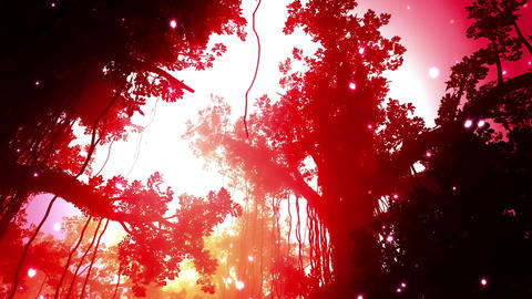 Mysterious Deep Jungle Fireflies in the Sunset Sun Animation