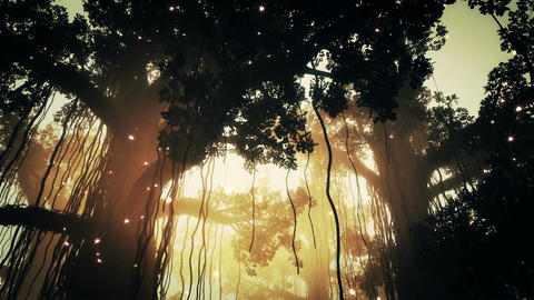 Mysterious Deep Jungle Fireflies in the Sunset Sun Stock Video Footage
