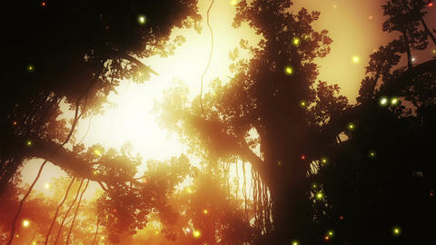 Mysterious Deep Jungle Fireflies in the Sunset 2 Animation