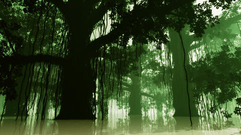 Mysterious Deep Jungle in Water at Night 3 Stock Video Footage