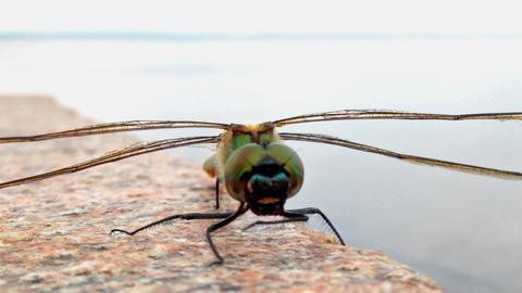 Dragonfly closeup shot Footage