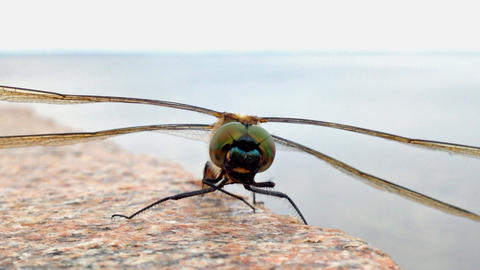 Dragonfly closeup shot Stock Video Footage