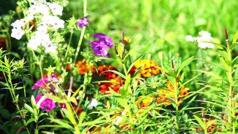 Summer meadow flowers Stock Video Footage