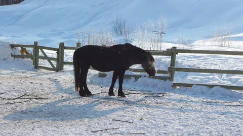 Horse walking on the snow Stock Video Footage