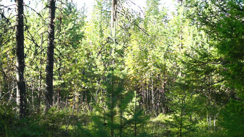 Forest panoramic view Footage