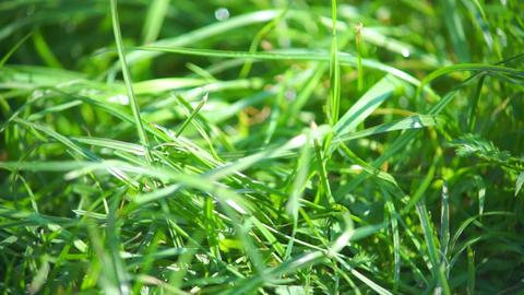 Green grass closeup view Stock Video Footage