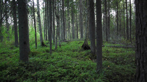 Grass and trees in deep summer forest Stock Video Footage