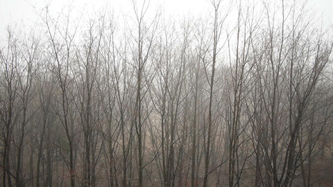 Tops of trees on grey sky background Stock Video Footage
